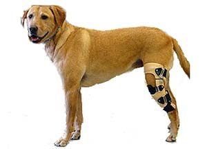 dog torn acl brace